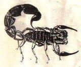 scorpio11.jpg